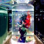 大阪でデートや合コンに使えるアクアリウム居酒屋「青の洞窟」